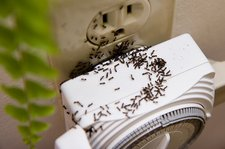 ants in socket wally hartshorn