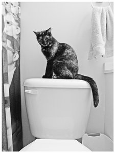 cat on toilet by carolesther