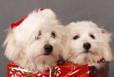 Cute Dog Christmas Card