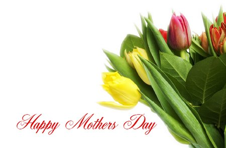 Happy Mothers Day Tulips for Mum