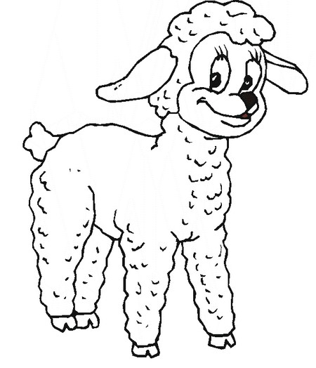 Animal coloring page of sheep